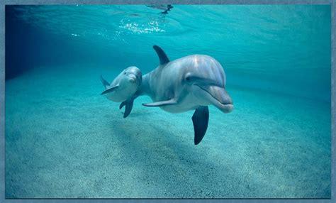 imagenes para fondo de pantalla delfines fondo escritorio bonitos delfines