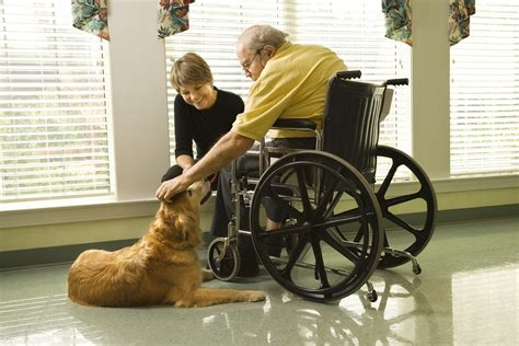 for therapy pet therapy for seniors matrixcare