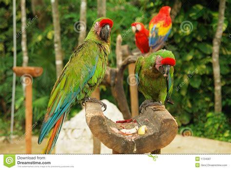 imagenes de loritos verdes loros verdes imagen de archivo imagen de p 225 jaro tropical
