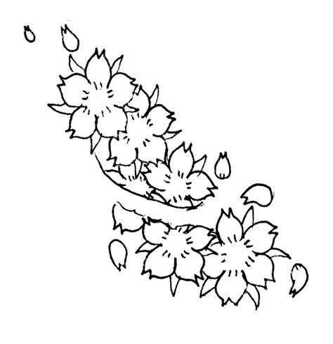 Cherry Blossom Branch Drawing Outline by The Gallery For Gt Cherry Blossom Black And White