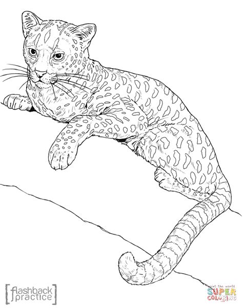 african cats coloring pages realistic wild cat coloring pages coloring page cartoon