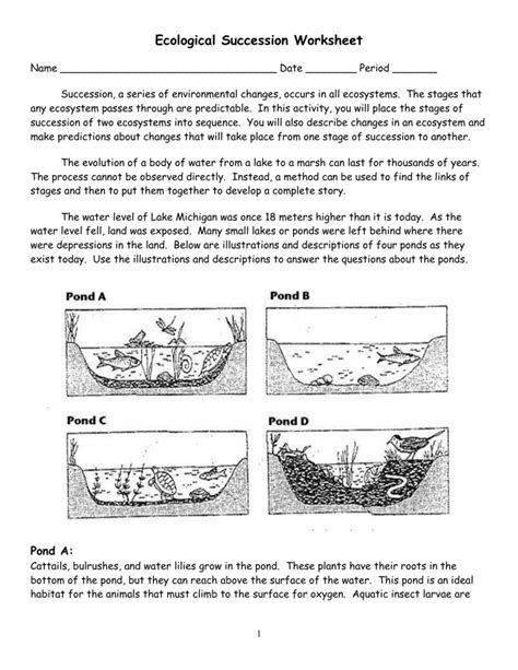 From Pond To Forest Worksheet Answers by Ecological Succession Worksheet Worksheets Releaseboard