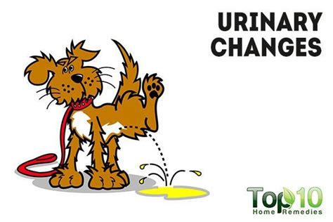 dog drinking excessive water and urinating in house 10 signs and symptoms that your dog is sick page 3 of 3 top 10 home remedies