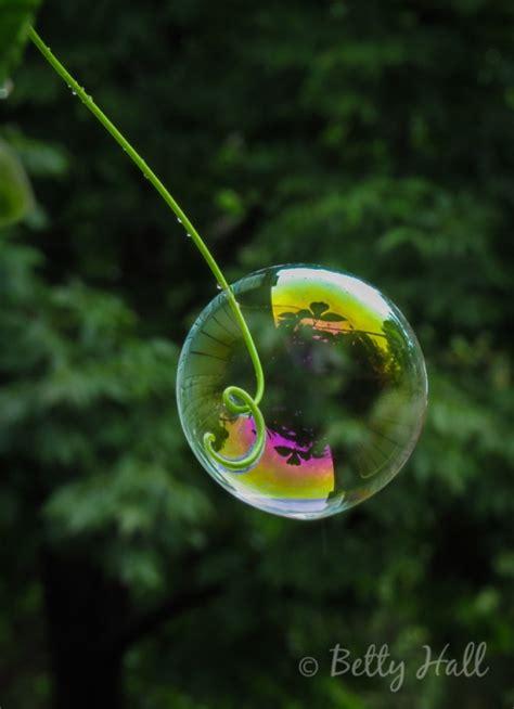 backyard bubble bubbles betty hall photography