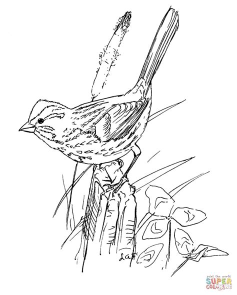 coloring page of house sparrow song sparrow bird coloring page free printable coloring