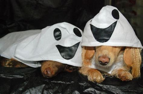 ghost costume for dogs 1000 ideas about costumes for dogs on costumes