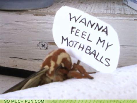 puns moth funny puns pun pictures cheezburger