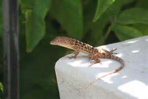 believe that pet lizards pet products from
