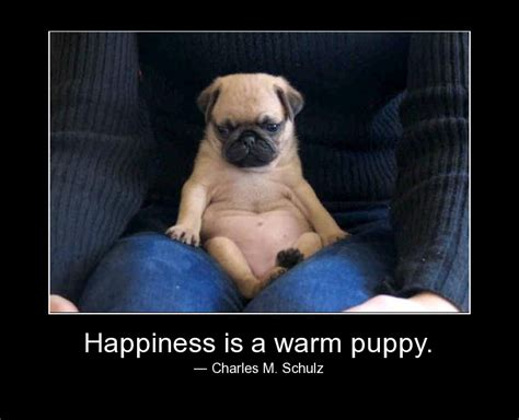 happiness is a warm puppy happiness quotes sayings pictures and images