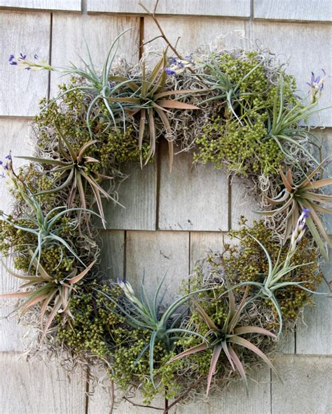 Make Plant - diy airplant wreath hgtv