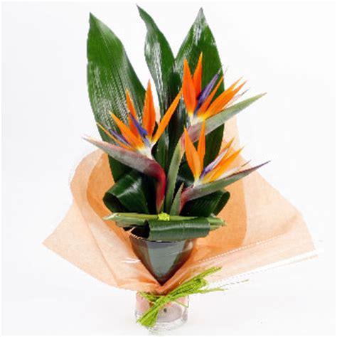 Bird Of Paradise Flower Arrangement Vase by