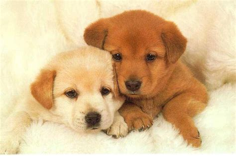 lil puppies puppies puppies picture