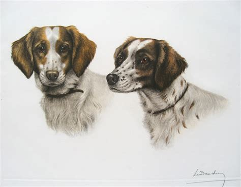 brittany spaniel heads french engraving dog print