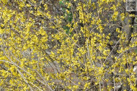 Blumen Und Sträucher 1802 by Gelb Bl 252 Hende Str 228 Ucher Australien Reisebericht Fahrt