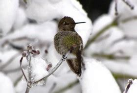 how to attract hummingbirds attracting hummingbirds