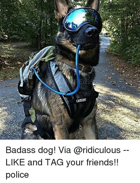 badass dogs 25 best memes about badass badass memes