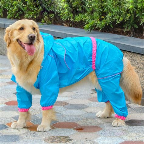 clothes for golden retrievers golden retriever raincoat reviews shopping golden retriever raincoat