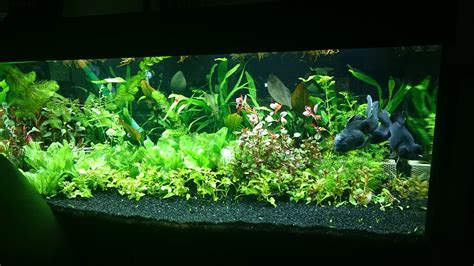 aquascape forum aquascape forum aquascaping world competition gallery rise