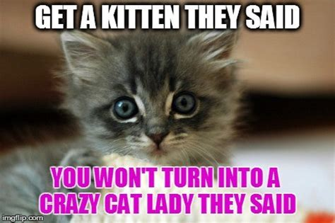 Cute Kitten Memes - 11 cute kitten memes will instantly brighten your day