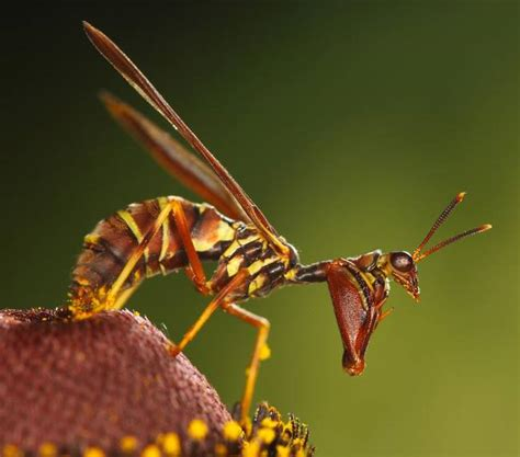 Amazing Beetles these 20 amazing insect defense adaptations are out of science fiction