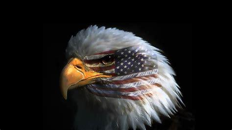 Lu Eagle Eye Mobil bald eagle phone wallpaper related keywords suggestions