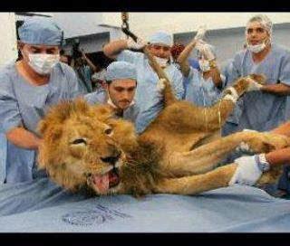 imagenes graciosas licey imagen graciosa 193 guila y leones del escogido republica