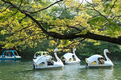 swan boats london the inokashira park swan boats ride is the best thing to