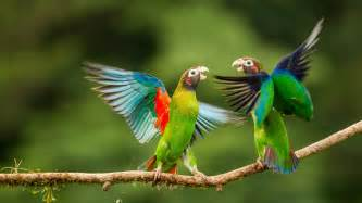 beautiful images most beautiful parrots 1080p wallpapers birds hd