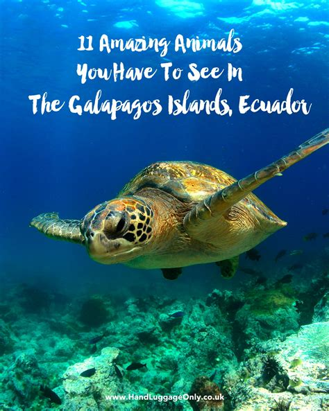 D Island 11 11 unique animals you to see in the galapagos islands