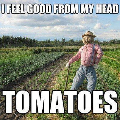 Gardening Memes - funny gardening memes gardening forums