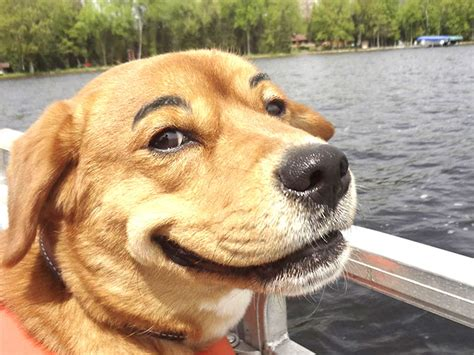 picture of puppy 28 hilarious photos of dogs with eyebrows that will make your day so much better