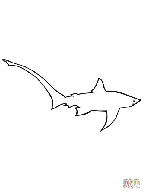 thresher shark coloring page long tailed or common thresher shark coloring page free