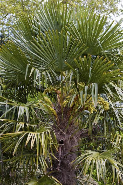 Chinesische Garten Pflanzen by 5 Winterharte Pflanzen F 252 R Den Dschungelgarten Mein
