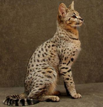 acheter un canapé en belgique chats de tous poils bienvenue chez sylvie de batz