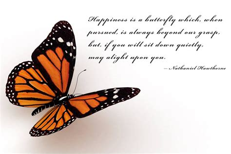 butterfly sayings getting butterflies quotes quotesgram