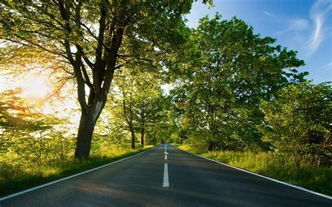 photography nature plants trees landscape road sun