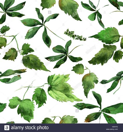 Images Of Clematis Leaves