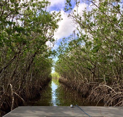 everglades airboat tour jungle erv through the mangrove tunnel picture of jungle erv s
