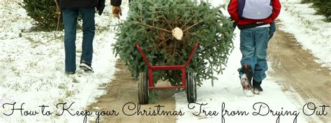 how to keep your christmas tree from drying out