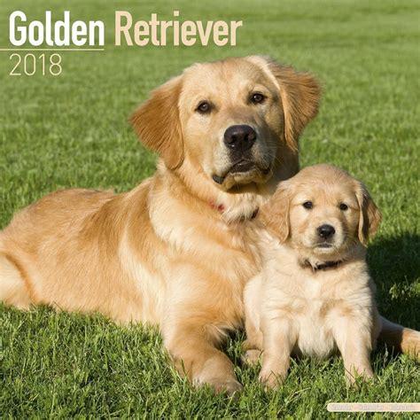 golden retrievers free to home golden retriever 2018 calendar 15 multi orders 163 7 16 picclick uk