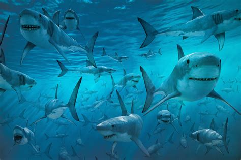 the shark in the music is the reason behind our fear from sharks rayan moukalled greenarea me