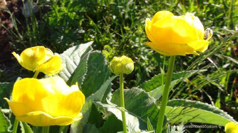 monte co dei fiori 02sentiero dei fiori alpinismo co