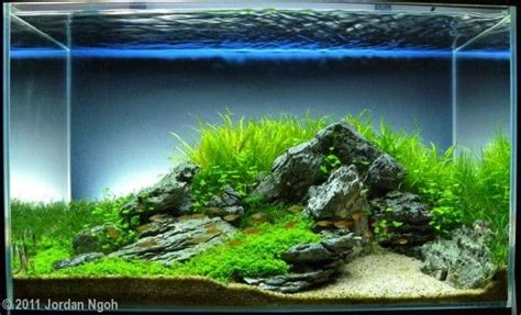 Planted Aquarium Aquascaping by Aga Aquascaping Contest 2011 Tank Size 60l 120l Blue