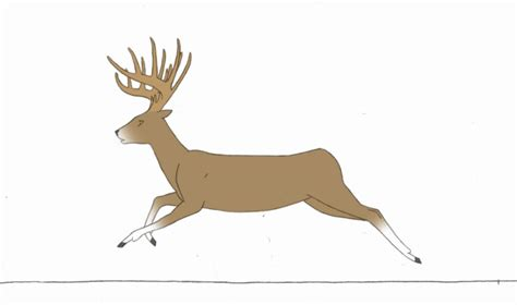 animated deer running deer animation completed kutkumegsan by