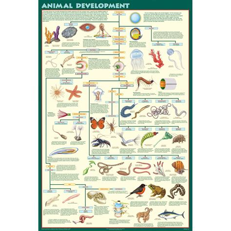 printable animal classification chart animal classification chart for kids printable www