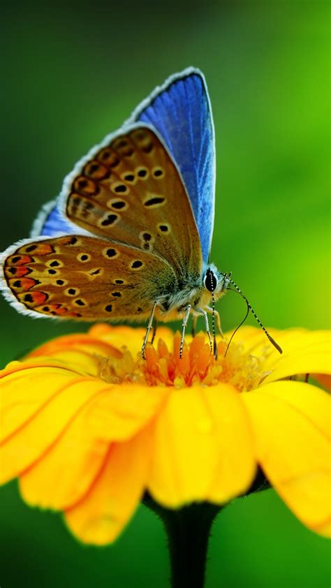 wallpaper butterfly insects flowers glass nature