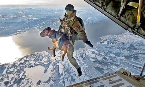 combat dogs combat dogs take to the skies for secret missions in afghanistan files