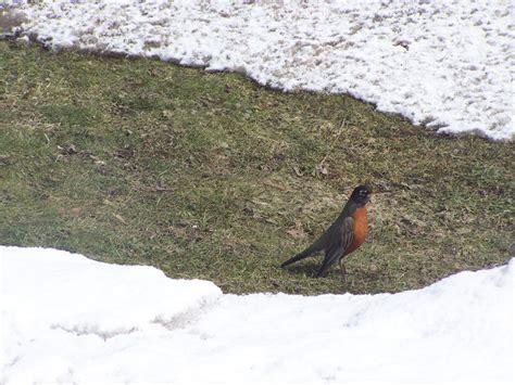 robins return goldensnowball com