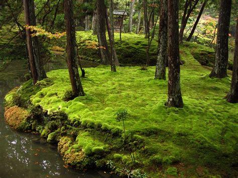 moss garden of saihō ji japan feel the planet
