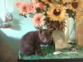kita  wayang puisi hidayat raharja kucing biru